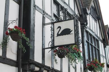 York black swan