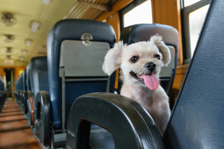 Dog on train