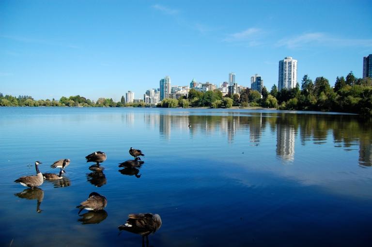 stanley-park-ducks